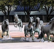 The Mustangs Of Las Colinas by coffeebean