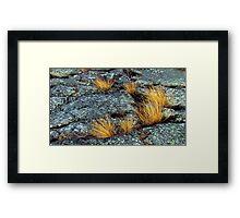Pukaskwa National Park - Lake Superior - Heron Bay- Ontario Canada Framed Print