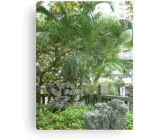 Palm Trees Fanning rocks Canvas Print