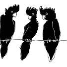 black cockatoos  by Matt Mawson