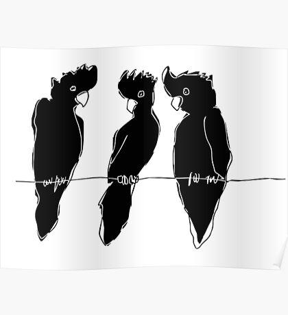 black cockatoos  Poster