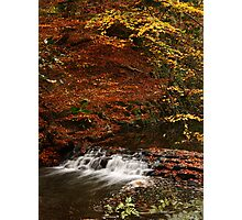 Ouseburn Fall in the Fall Photographic Print