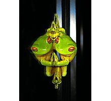 Narcissistic Frog... (Litoria Chloris) Photographic Print