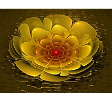 Floating Bloom Photographic Print
