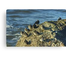High Tide Roost Canvas Print