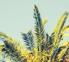 Palm by Esther Ní Dhonnacha
