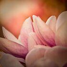 Magnolia 2 by imagesbyjillian