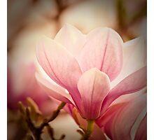 Magnolia 7 Photographic Print