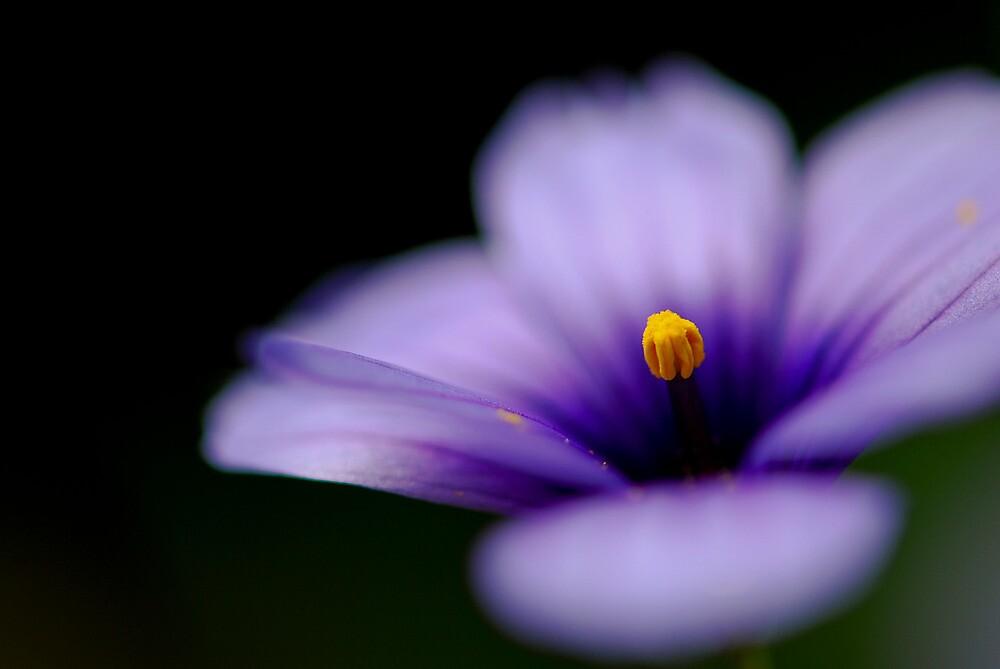 a sprinkle of magic by sapaho