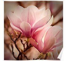 Magnolia 11 Poster