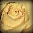 Just like a rose by Karen Tregoning