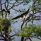 Eagle Pair and Nest by Deborah  Benoit