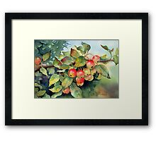Green crab apples Framed Print