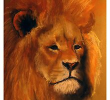Lion Sketch by burramys