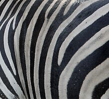 ZEBRA STRIPS AND STRIPES by Magriet Meintjes