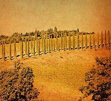 Along a Tuscan Hill-Montalcino by Deborah Downes
