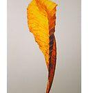 yellow leaf by YourHum