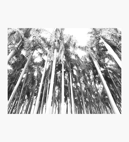 OMG Palm trees Photographic Print