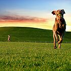 Happy Dogs at Sunset by 1grayweim