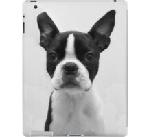 Portrait of Meryl the Boston Terrier iPad Case/Skin