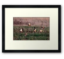 Grey Partridge Framed Print