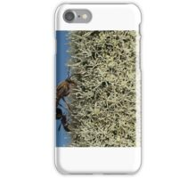 Bugs on an xanthorrhoea johnsonii iPhone Case/Skin