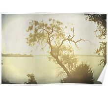 Mesquite Tree and the Lake Poster