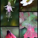 Nature's Finest by Kimberly Palmer