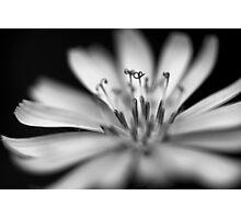 Monochrome Flower 1 Photographic Print