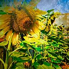 Home grown Sunflowers by webgrrl