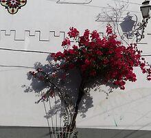 White wall with red bougainvillea - Muro blanco con bougainvillea roja by Bernhard Matejka