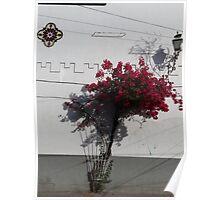 White wall with red bougainvillea - Muro blanco con bougainvillea roja Poster