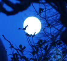 Blue Moon by cameralisa
