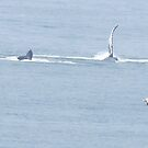 Humpback whale greets Puerto Vallarta with his one flapper by Bernhard Matejka