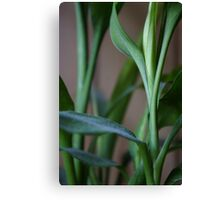 dusty bamboo bokeh Canvas Print