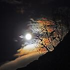 Moon Iridescence over Snow Covered Tree Branches by geiroye