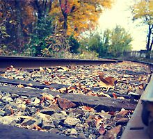 Leaves on Track by Bekalot