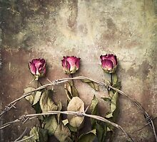 three dried roses and barbed wire by Maria Heyens