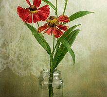 Sneezeweed breeze by Mandy Disher