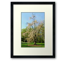 Spring Bloom Framed Print