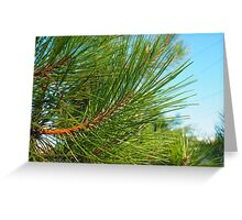 Side view of a young pine tree branch with long needles Greeting Card