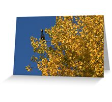 Paris - Le cormoran d'automne Greeting Card
