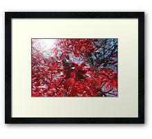 Black and Red Crescendo Framed Print