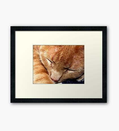 Petie Napping Framed Print