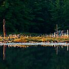 Balsam Lake Shoreline by Skye Hohmann