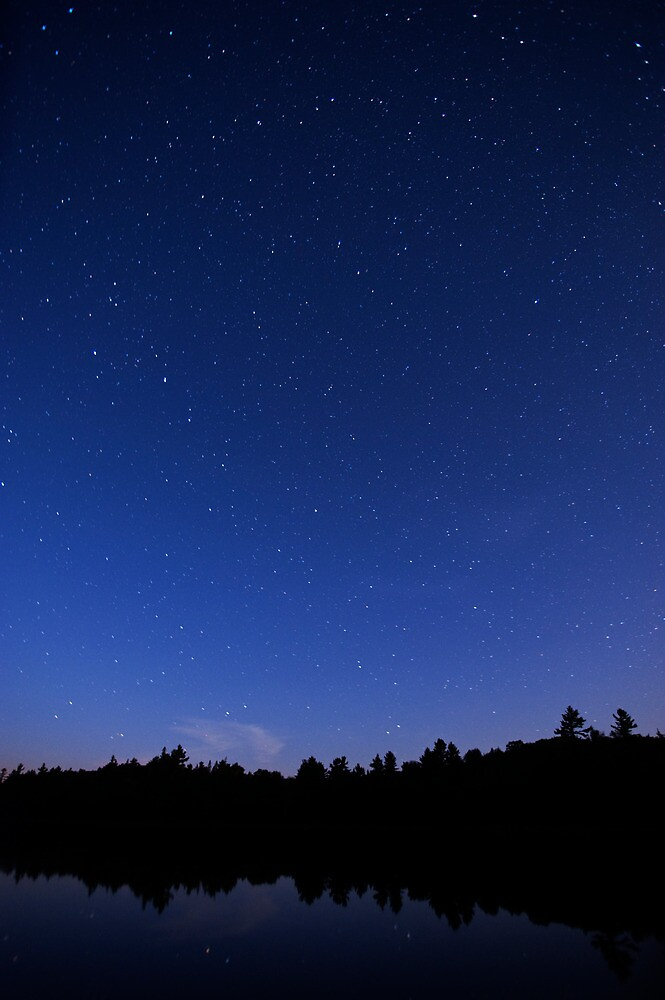 Starlight Night by Skye Hohmann