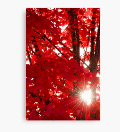 How Lovely Was The Morning Canvas Print