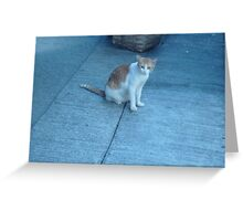 A Curious Little Kitty Greeting Card