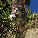 Supercat by turniptowers