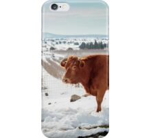 Cows in Snowscape. Photographed in the Golan Heights, Israel  iPhone Case/Skin